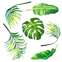 Set Of Botanical Vector Illustrations