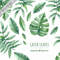 Hand Painted Green Leaves Pack