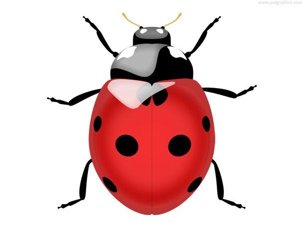 Ladybug Icon (PSD)