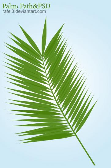 Palm Path PSD