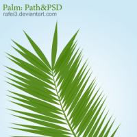 Palm Path PSD