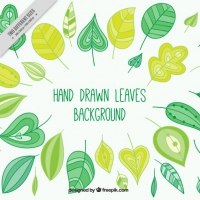 Sketches Leaves Background