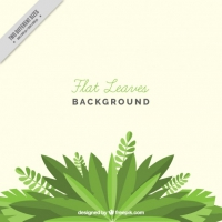 Flat Leaves Background