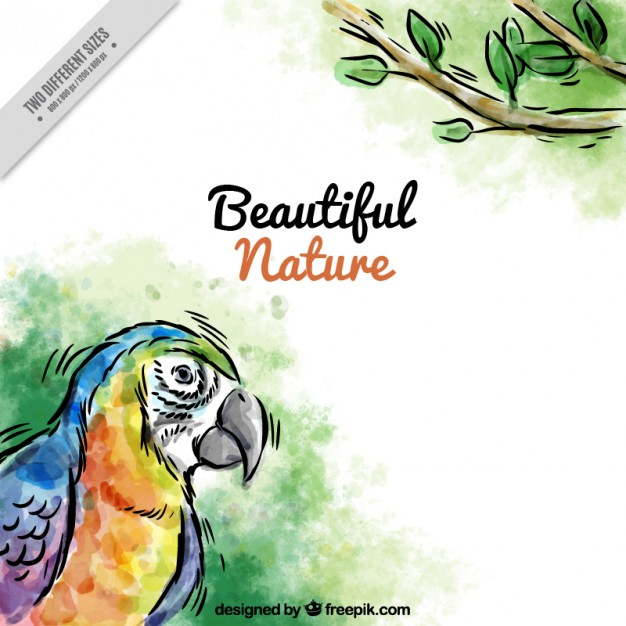 Hand Drawn Watercolor Parrot Background