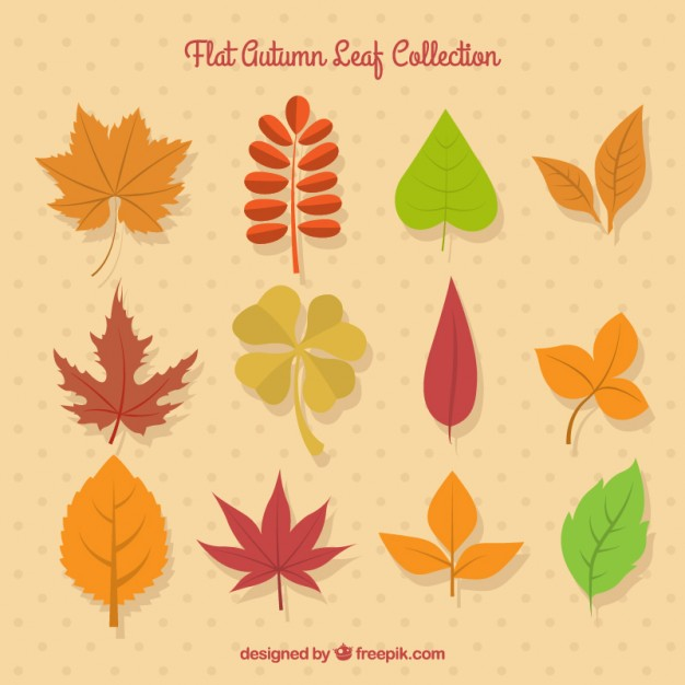 Selection Of Autumn Leaves